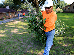 This image shows a tree removal service in Houston