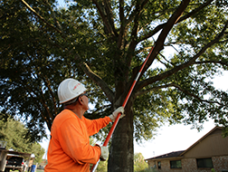 This image shows tree service being performed